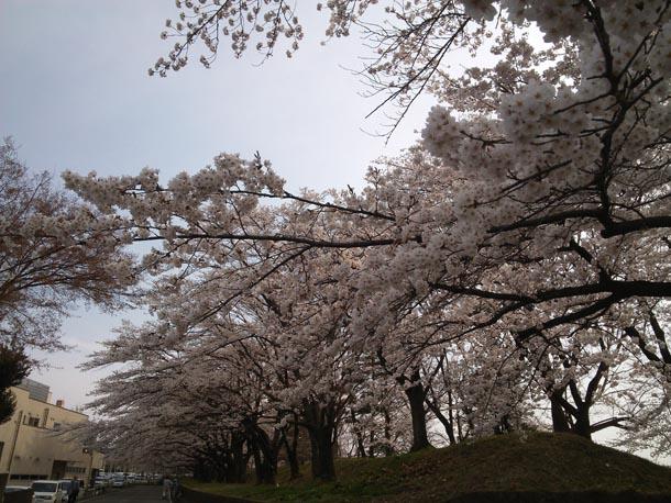 満開の桜の中で!!