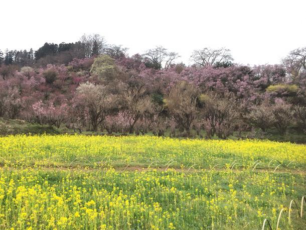 春!ようこそ~~