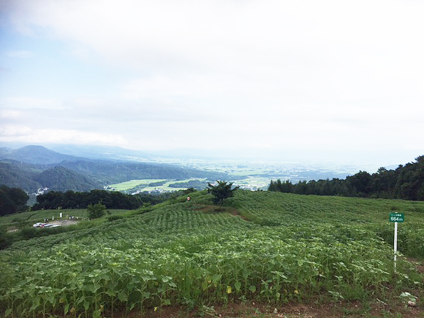 青いひまわり畑で!!