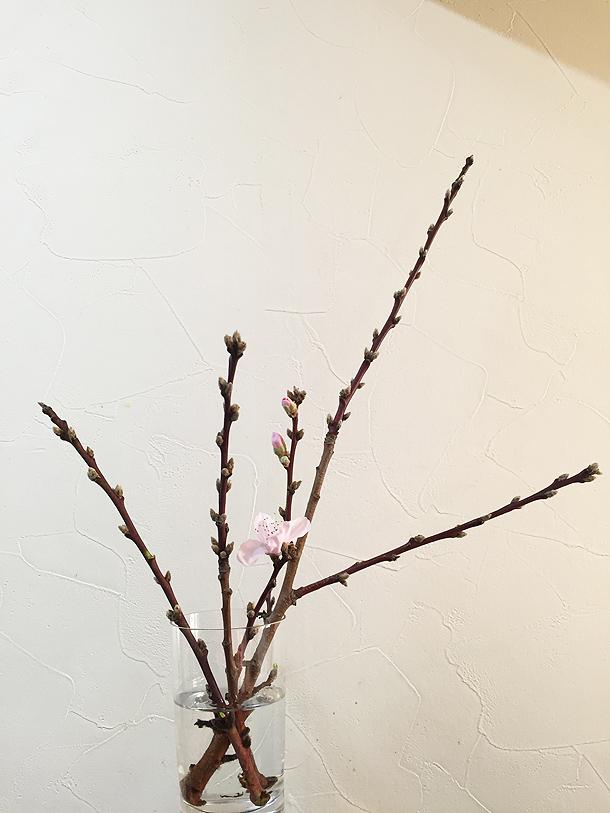 我が家に春がきた!